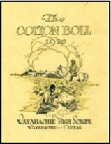 Cotton Boll picture
